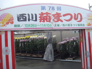 菊まつりオープン.JPG